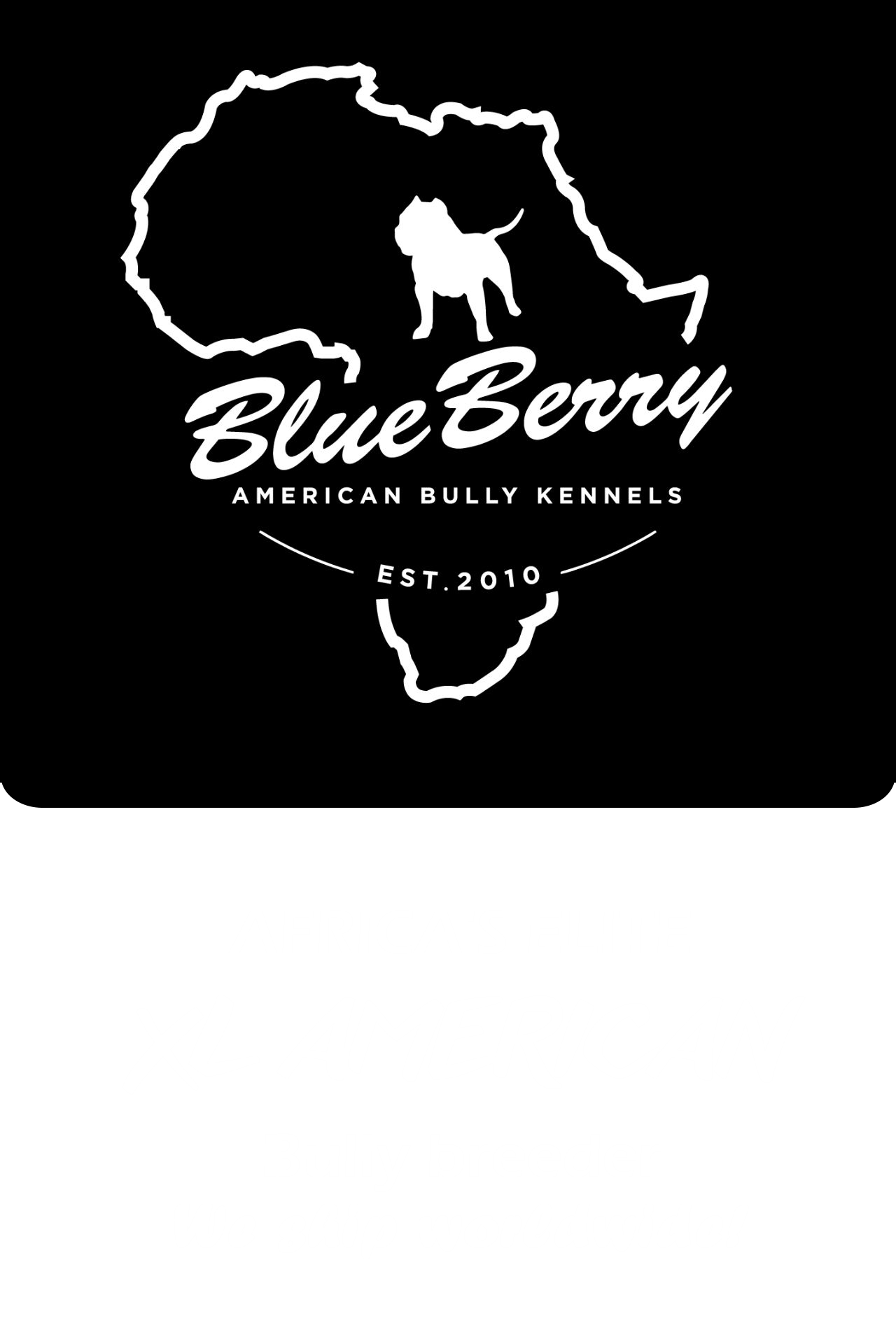 BlueBerry American Bully Kennels